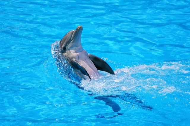 Dreaming of dolphin, what does it mean